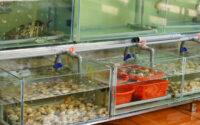 Vận chuyển hải sản